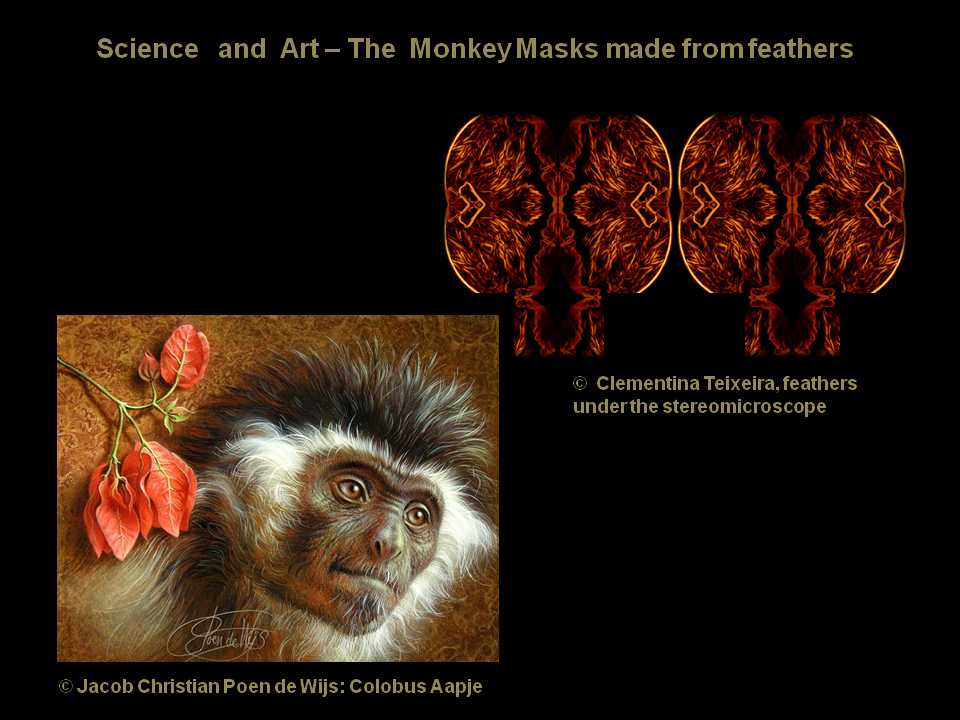 Macacos e penas